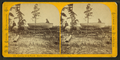 Camping out in Florida - Hauling over. (Salt Lake to Indian River), by Styles, A. F., 1832-1910.png