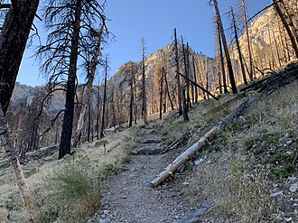 Carpenter 1 Fire - Burned trees from the Carpenter 1 fire on the South Loop Trail to Charleston Peak outside of the Cathedral Rock Picnic Area, in the Spring Mountains National Recreation Area.