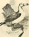 Cassell's natural history (1854) (14563805828).jpg