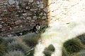 Castle Cat (8217051891).jpg