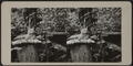 Cat atop pillow on a tree stump, from Robert N. Dennis collection of stereoscopic views 3.png
