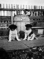Cat preparing to pounce on two sled dog puppies, Alaska (AL+CA 5830).jpg