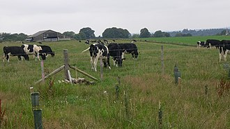 Thursley - Rich and fertile soil supports arable farming, or grass-supported dairy farming as shown