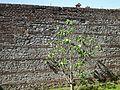 Cecchina di A.L. - Mura antiche della tenuta del casale Milita.JPG