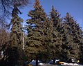 Central Park in Vinnytsya 21.JPG