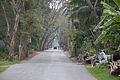 Champahati-Baruipur Road - Sitakundu - South 24 Parganas 2016-02-14 1460.JPG