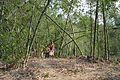 Charak Puja Procession - Narna - Howrah 2014-04-14 0399.JPG