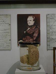 Charles Babbage Brain - Science Museum (London).jpg