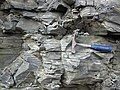 Chattanooga Shale (Upper Devonian; Burkesville West Rt. 90 roadcut, Kentucky, USA) 9 (42300436062).jpg