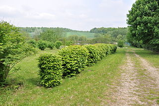 Druzhba, Ternopil Oblast Urban locality in Ternopil Oblast, Ukraine
