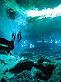 Clear water in the Cenotes in Mexico (28712334157).jpg