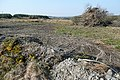 Clearing the land - geograph.org.uk - 1831762.jpg