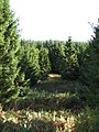 Cloich Forest - geograph.org.uk - 997878.jpg