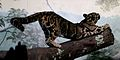 Clouded Leopard Stretch.jpg