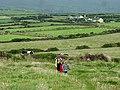 Coastal path climbs to Ceann na Binne - geograph.org.uk - 1593551.jpg
