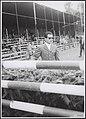 Collectie Fotocollectiie Afdrukken ANEFO Rousel, fotonummer 157-0315, Bestanddeelnr 157-0315.jpg