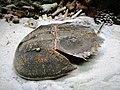 Con so - So biển Nha Trang 1.jpg