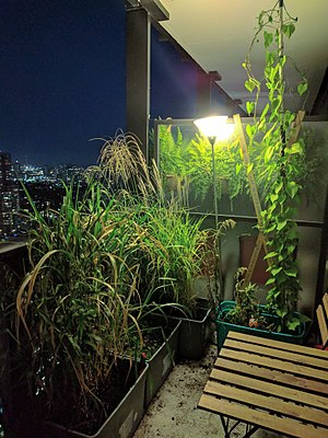 Container garden - Image: Condominium balcony container gardening at night