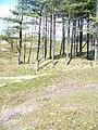 Conifers on Berges Island - geograph.org.uk - 1417427.jpg