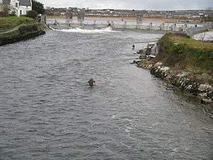 River Corrib - Looking north from the Salmon Weir Bridge in Galway