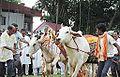 Cows in Halakarshana.JPG