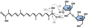 α–crocin formation mechanism