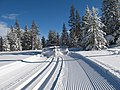 Cross Country Ski Trail - Setting corduroy and classic tracks.jpg