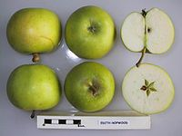 Cross section of Edith Hopwood, National Fruit Collection (acc. 1925-029).jpg