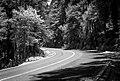Curvy Road (68298501).jpeg