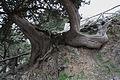 Cypress4(js).jpg