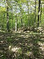Dactylorhiza sambucina sl58.jpg