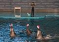 Dalian Liaoning China Laohutan-Ocean-Park-07c.jpg