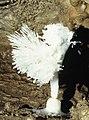 Darren Cilau Cave Llangattock - geograph.org.uk - 1195292.jpg