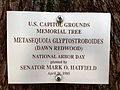 Dawn redwood plaque US Capitol grounds May 2012.jpg