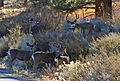 Deer herd in Swall Mdws close.jpg