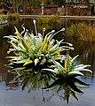 Denver Botanic Gardens 11-2 (15786524302).jpg