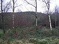 Derrylahan Townland - geograph.org.uk - 1089631.jpg