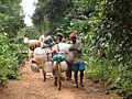 Des marchands tolekistes entre Epulu et Mambasa, 2005.jpg