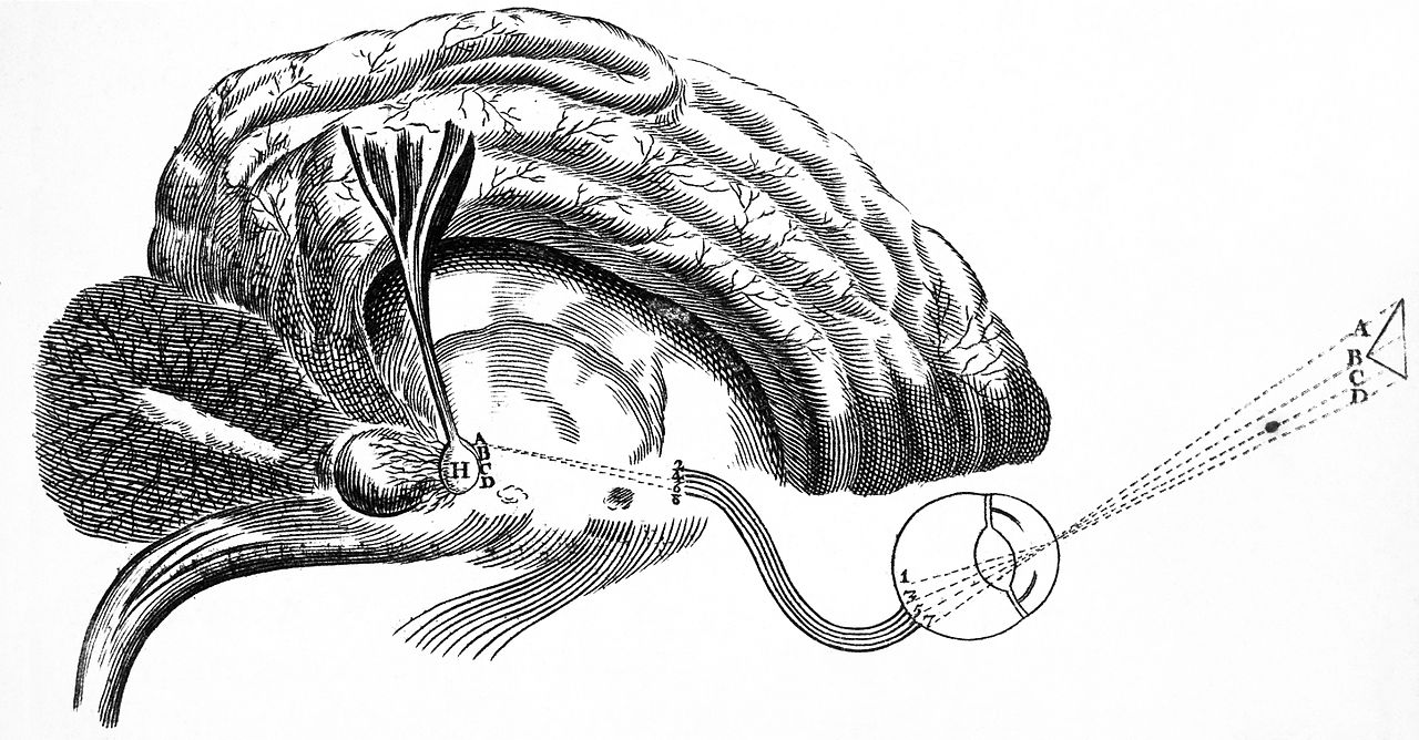 File Descartes  The Nervous System  Diagram Of The Brain Wellcome L0006584 Jpg