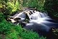 Deschutes National Forest Trapper Creek (36922391592).jpg
