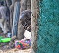 Dima, Ethiopia (10029681014).jpg