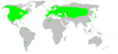 Distribution.cyclosa.conica.1.png