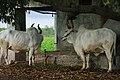 Ditala - Gujarat, India (5933441785).jpg