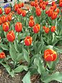 Dixon Gardens Memphis TN 2014-04-06 094.jpg