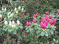Dixon Gardens Memphis TN 2014-04-06 133.jpg