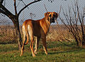 Dog 0005.jpg