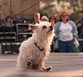 Dog performs during Pet Pride Day, 2002.jpg