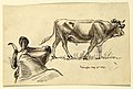 Drawing, Sketches. Cattle, Irvington, September 1876 (CH 18369023).jpg