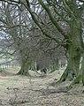 Drover's road, Eglwyseg Mountain - geograph.org.uk - 756693.jpg