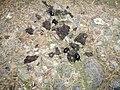 Dung Beetles (1763984395).jpg